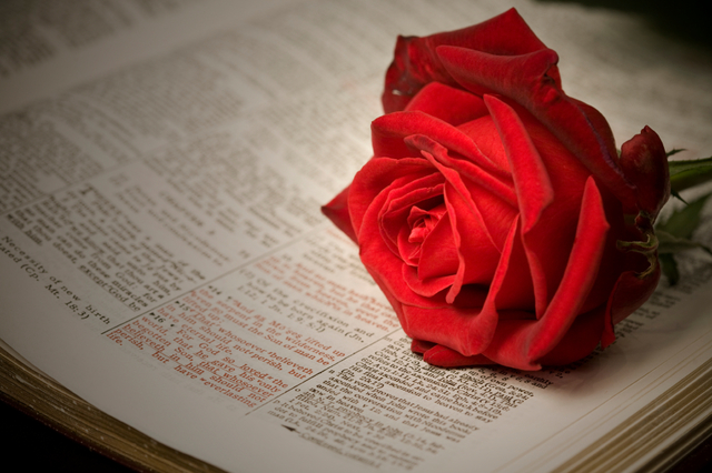 The 16 Most Romantic Lines from the Scriptures | LDS Living