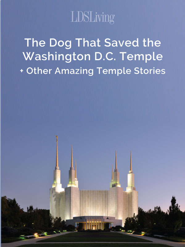 The Dog That Saved the Washington D.C. Temple + Other Amazing Temple Stories