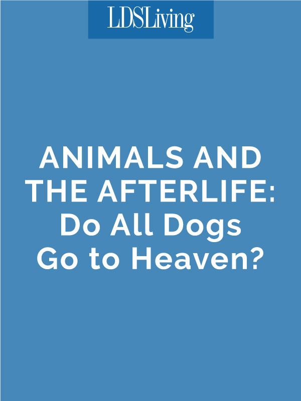 After putting a beloved pet down, I began to wonder: what's the doctrine about animals and heaven?
